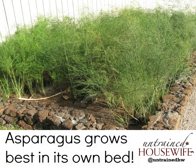 Best Place To Plant Asparagus: How To Grow Asparagus In A Home Garden