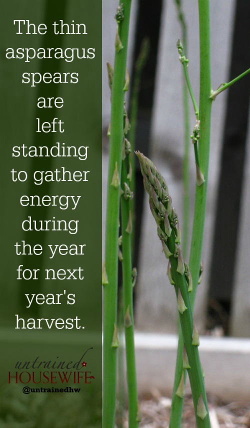 How to boost your asparagus harvest
