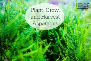 How to Grow Asparagus in a Home Garden