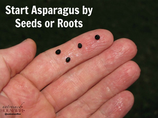 How to start asparagus