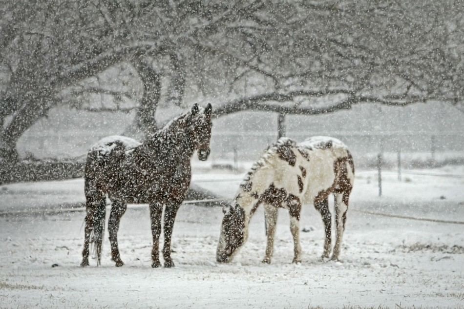 How Animals Stay Warm In the Snow