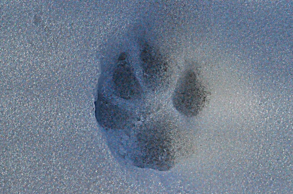 Search For Animal Tracks and Signs