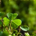 Irish – Celtic Quotes, Sayings and Scrapbooking Words