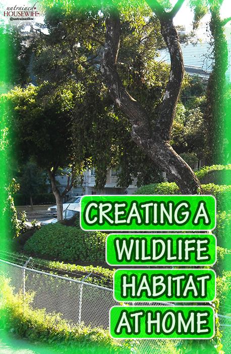 Creating a Wildlife Habitat at Home