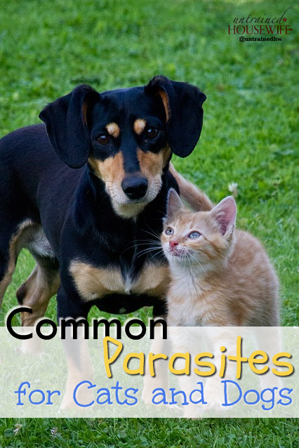 Common Parasites for Dogs and Cats