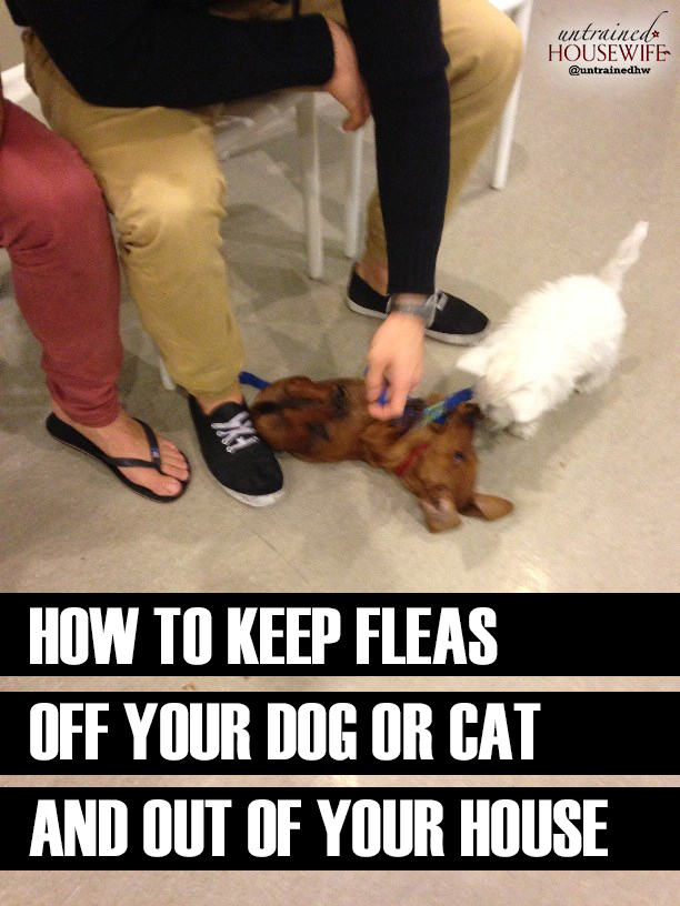 How to Keep Fleas Off Your Dog or Cat and Out of Your House