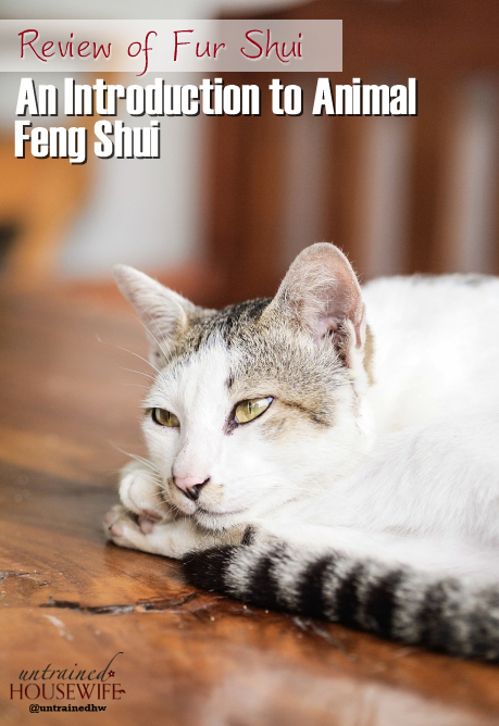 An Introduction to Animal Feng Shui