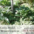 Green mulch for winter gardens