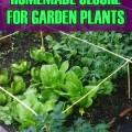 A Homemade Cloche for Garden Plants