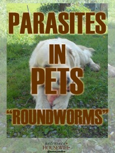 Parasites in Dogs and Cats: Roundworms