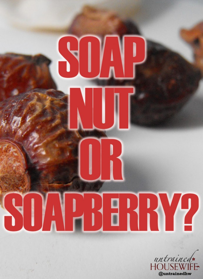 What is a Soap Nut or Soapberry?
