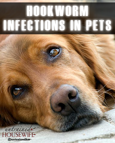 Hookworm Infections in Dogs, Cats and Humans
