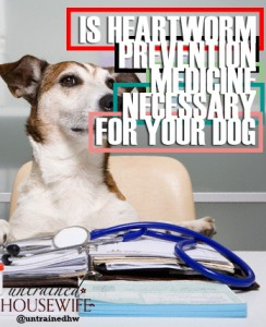Is Heartworm Prevention Medicine Necessary for Your Dog?