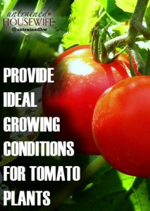 Provide Ideal Growing Conditions for Tomato Plants