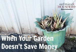 Gardens don't always save money. This is a cautionary tale for those wanting a container garden.