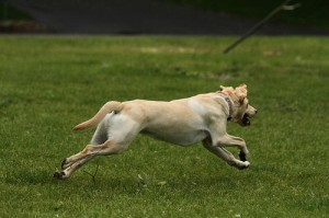 Tips to Keep Your Pet Healthy and Happy
