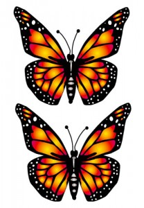 Big Butterfly Yellow Preview