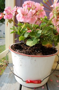 Creative Planting Containers