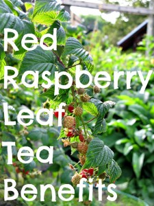 Pregnancy Nutrient Booster: Homemade Pregnancy Tea Blend