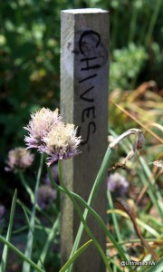 Chives: The Delightful Little Onion for Your Herb Garden
