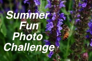 Summer Fun Photo Challenge on Blissfully Domestic