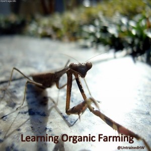 Learning the Ins and Outs of Organic Farming