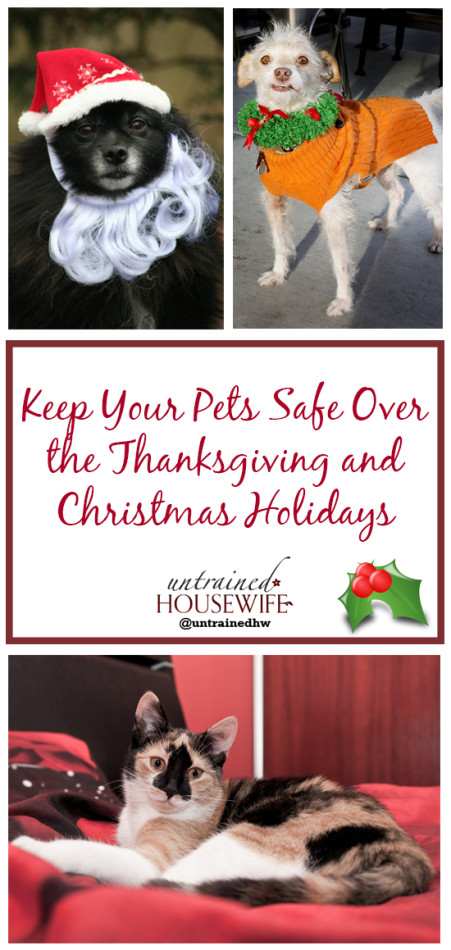 How to Keep Your #Pets Safe During the Holiday Season @UntrainedHW #health #safety #family #Christmas
