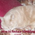 Reduce Shedding in Pets