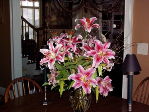 Lilies and Cats: Symptoms, Diagnosis and Treatment of Lily Toxicity