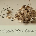 grow-seeds-you-can-save