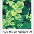 Peppermint (Mentha Piperita)