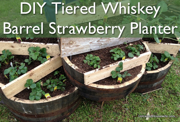 Tiered Whiskey Barrel Strawberry Planter - Tiered Whiskey Barrel Strawberry Planter DIY