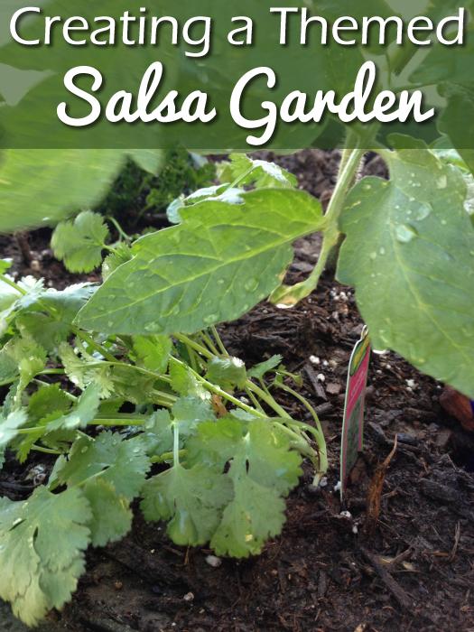 Salsa Garden in a Container