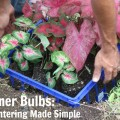 Caladium Summer Bulb Keeper