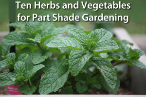 UntrainedHousewife's top 10 plants for shade gardening