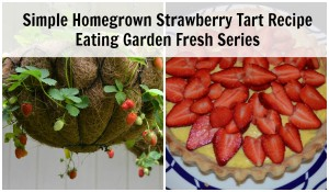 Simple Homegrown Strawberry Tart Dessert – Eating Garden Fresh