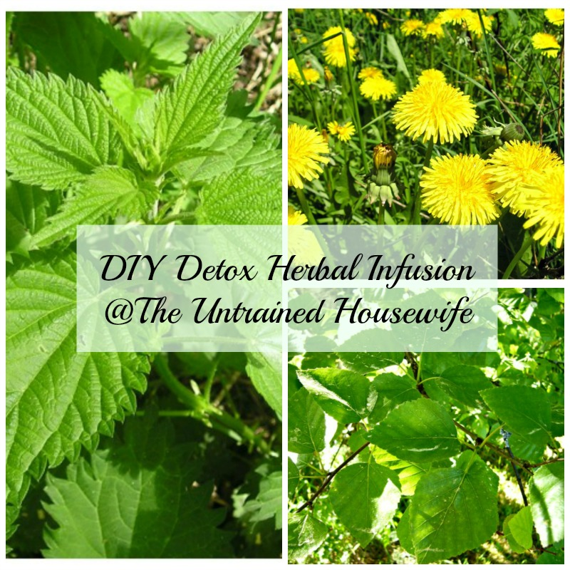 Nettle, Dandelion and Birch Herbal Infusion