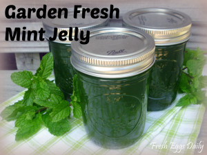 Garden Fresh Mint Jelly Canning Recipe