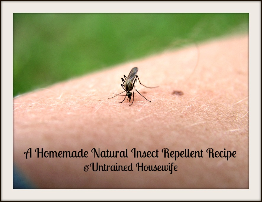 Natural Repellent Against Bed Bugs