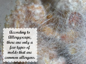 Allergies: Symptoms of Mold Exposure