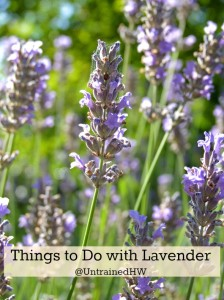Things To Do with Lavender