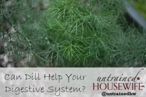 Can Dill Help Your Digestive System?