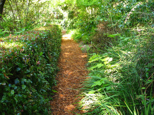 Garden Pathways – What to Use to Pave or Cover a Walkway