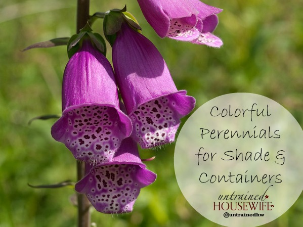 colorful perennials for partial shade gardens or containers, Natural flower