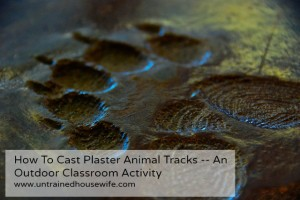How to Cast Plaster Animal Tracks — An Outdoor Classroom Activity