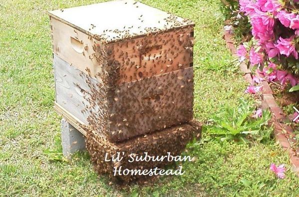 Merveilleux Backyard Beehive