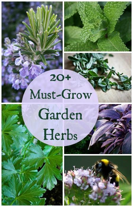 20+ Must Grow Herbs For Your Garden