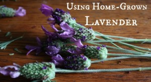 Using Home Grown Lavender