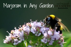 Marjoram is a beneficial plant for any garden