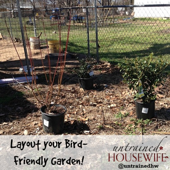 Laying out your bird-friendly garden landscape